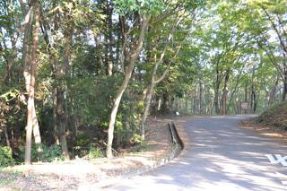 森林,散歩道,日陰