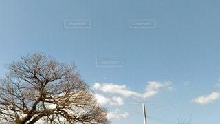 自然,風景,空,木,屋外,白,雲,晴れ,青空,晴天,水色,景色,樹木,電柱,電線,昼,昼間,草木,日中,クラウド