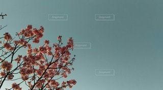 桜と空の写真・画像素材[3043588]