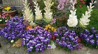 自然,風景,花,春,花畑,屋外,ピンク,白,かわいい,綺麗,晴れ,晴天,紫,黄色,景色,花びら,鮮やか,オレンジ,ガーデニング,色とりどり,土,可愛い,花壇,昼,寄せ植え,昼間,3月,スプリング,彩り,日中,春爛漫,4月,ガーデン,キレイ,フローラ
