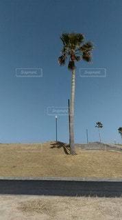 晴れた日のヤシの木の写真・画像素材[3047348]