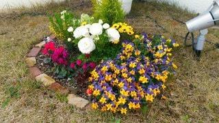 自然,風景,花,春,芝生,庭,屋外,緑,植物,赤,白,かわいい,きれい,綺麗,晴れ,晴天,紫,黄色,景色,ライト,花びら,満開,レンガ,草,草花,色とりどり,照明,可愛い,花壇,昼,寄せ植え,芝,昼間,可憐,3月,彩り,日中,香り,春爛漫,4月,ガーデン,カワイイ,キレイ,良い匂い