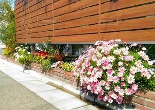 道端の花壇の写真・画像素材[3073520]