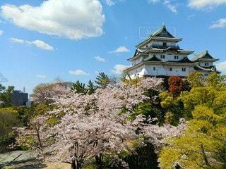 和歌山城と桜の写真・画像素材[3077591]