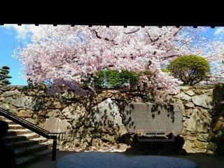 門をくぐった先の写真・画像素材[3077811]