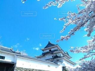 桜と見上げた和歌山城の写真・画像素材[3077814]