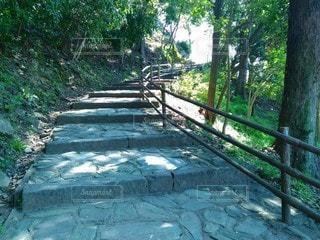森の中の階段の写真・画像素材[3077815]