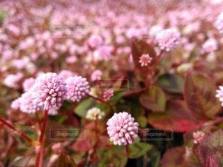 一面の花の写真・画像素材[3088494]