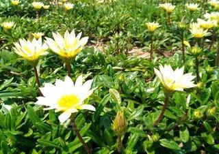 緑の葉の黄色い花の写真・画像素材[3108587]