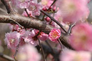 花のクローズアップの写真・画像素材[3023434]