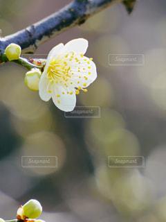 花のクローズアップの写真・画像素材[3023614]