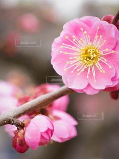 花のクローズアップの写真・画像素材[3023613]