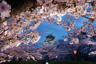 夜桜の額 大阪城の写真・画像素材[3037680]