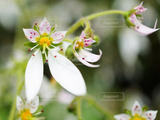 植物の上のピンクの花の写真・画像素材[3037802]