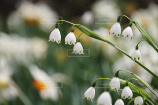 花のクローズアップの写真・画像素材[3037805]