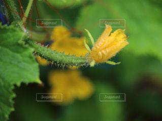 花のクローズアップの写真・画像素材[3039420]