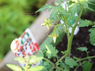 植物のクローズアップの写真・画像素材[3039421]