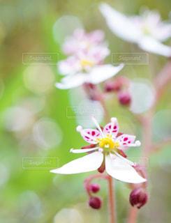 花のクローズアップの写真・画像素材[3039422]
