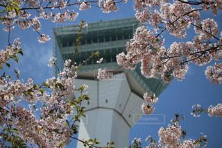 木に花の花瓶の写真・画像素材[3042071]