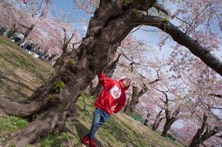 男性,1人,風景,空,花,春,桜,屋外,赤,樹木,人
