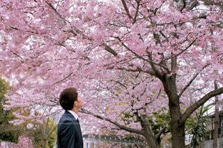 男性,風景,公園,花,春,桜,屋外,ピンク,花見,満開,樹木,お花見,人,入学式,旅立ち,草木,桜の花,さくら,スーツ,ブロッサム,フレッシュマン,入社式
