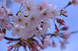 花のクローズアップの写真・画像素材[3042076]