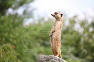 動物のクローズアップの写真・画像素材[3042396]