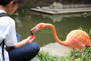 水の中の鳥を見ている人の写真・画像素材[3042403]