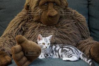 テディベアの上に横たわる猫の写真・画像素材[3042406]