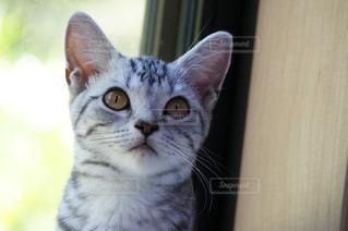 カメラを見ている猫の写真・画像素材[3042407]