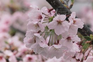 花のクローズアップの写真・画像素材[3068198]