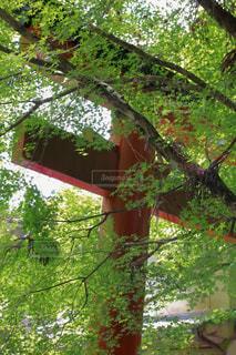 木のクローズアップの写真・画像素材[3155096]
