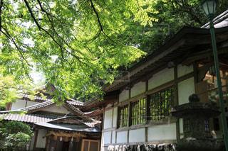 背景に木がある家の写真・画像素材[3155107]
