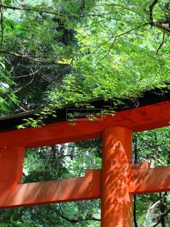 貴船神社の写真・画像素材[3155111]