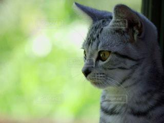 猫のクローズアップの写真・画像素材[3210052]