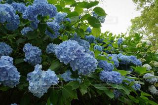 花園のクローズアップの写真・画像素材[3409749]