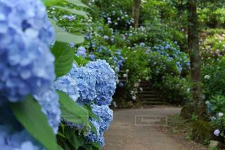 庭の緑の植物のクローズアップの写真・画像素材[3409746]