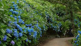 花園のクローズアップの写真・画像素材[3409752]