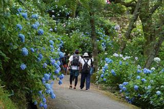 木の隣に立っている人々のグループの写真・画像素材[3409755]