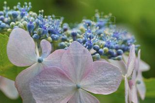 花のクローズアップの写真・画像素材[3409750]