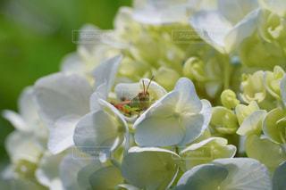 花のクローズアップの写真・画像素材[3409753]