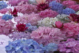 花のクローズアップの写真・画像素材[3409756]