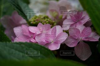 花のクローズアップの写真・画像素材[3409758]