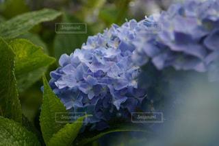 緑の植物のクローズアップの写真・画像素材[3409757]