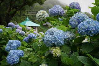 花園のクローズアップの写真・画像素材[3409763]