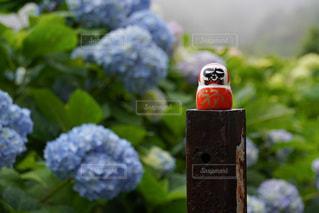 花のクローズアップの写真・画像素材[3409762]