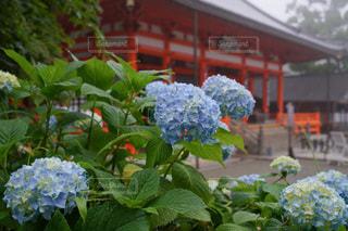 花園のクローズアップの写真・画像素材[3409764]