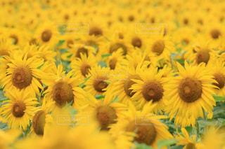花のクローズアップの写真・画像素材[3579928]