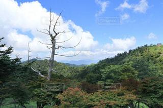 森の中の大きな木の写真・画像素材[3660220]