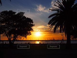 自然,風景,空,夕日,屋外,海外,太陽,ビーチ,夕焼け,夕暮れ,樹木,旅行,港,ヤシの木,オーストラリア,夕陽,メルボルン,草木,セントキルダ